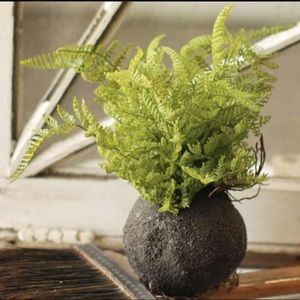 Rooted Lace Fern